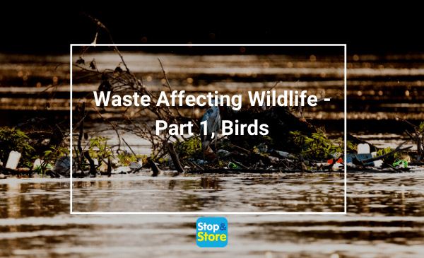 Bird sitting amongst debris mixed with plastic stretched across a river